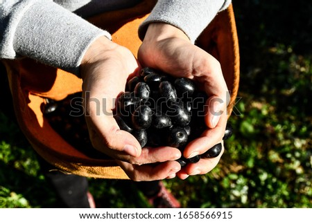 woman holding a handful of cherries, digital photo picture as a background
