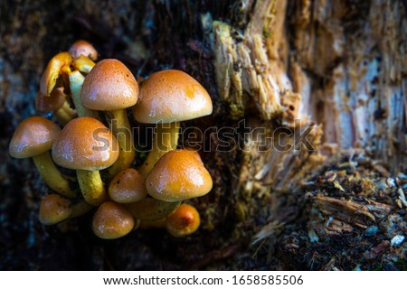 Mushrooms on a rotten tree #1658585506