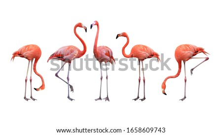 Flamingo bird animal set photo isolated on white background. This has clipping path.  #1658609743