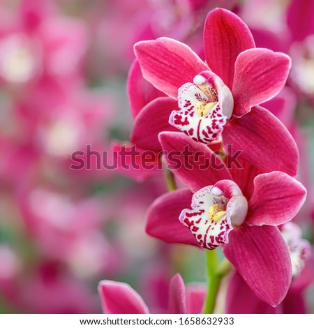 Beautiful sweet pink color Phalaenopsis orchid flower tree in soft color and blur. Orchids flower, orchids closed up. Copy Space.