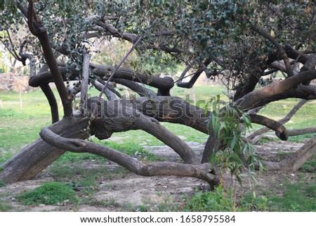 A picture of weird branches of a tree