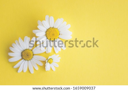 Marguerites on colorful background, with text space, template, design