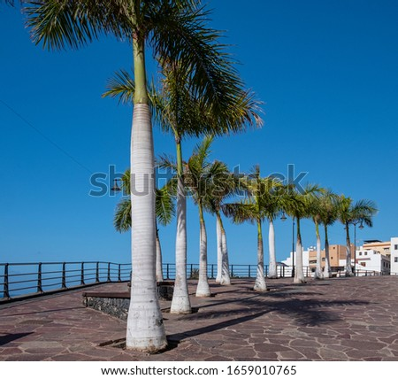 Palm trees along the promenade in Alcala Tenerife Spain #1659010765