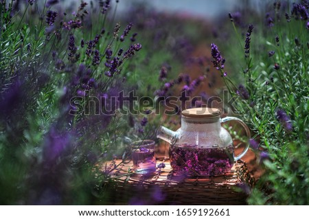 Selective focus on lavender tea an lavender flower in flower garden - lavender flowers lit by sunlight, Dalat, Vietnam #1659192661