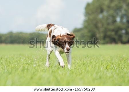 Running dog #165960239