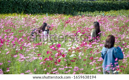 photo caption outdoor activities in spring season on flower park
