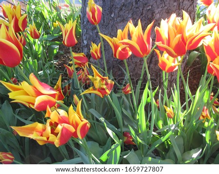 colorful tulips in the garden #1659727807