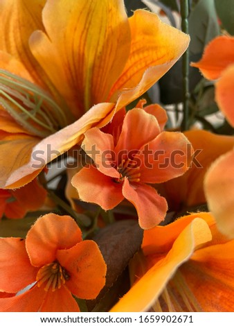 The image of orange flowers in the morning.