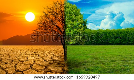 The screen separates the drought and the complete forest where the wildlife is living. Global warming concept #1659920497