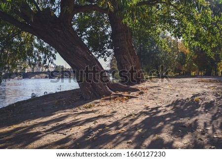 Two trees on island in Prague with view on Vltava river and bridge. #1660127230