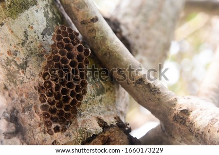 The picture of a hornet's nest on a tree