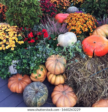 Pumpkins and flowers photo. Garden in the fall.