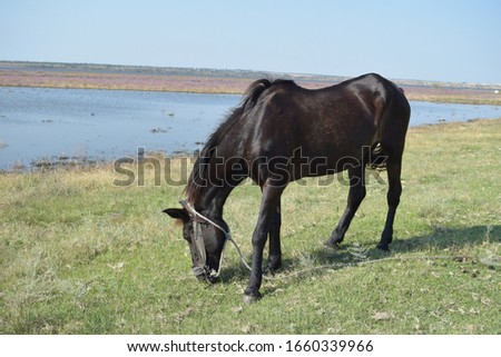horse eating grass in a field near the estuary #1660339966