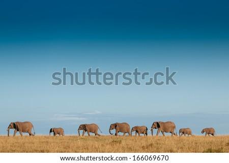 elephant family #166069670