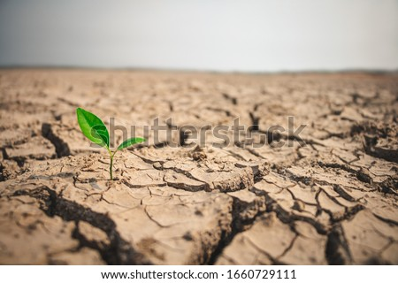 Growth of trees in drought crisis, Living with tree drought. Royalty-Free Stock Photo #1660729111