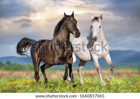 Two beautiful horse run gallop on flowers field with blue sky behind #1660817065