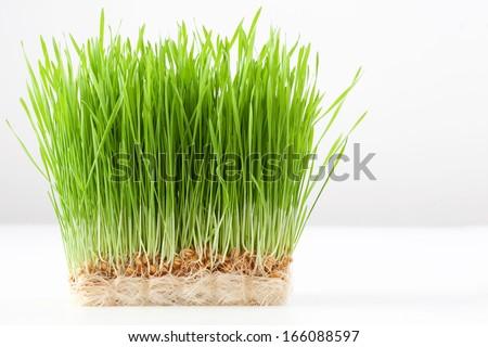 wheat grass #166088597