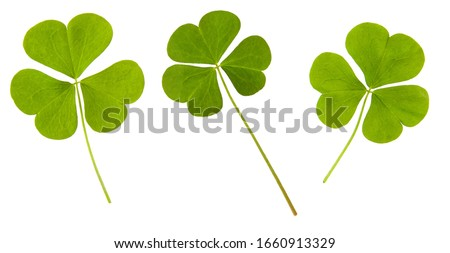 Clover green leaf set isolated on white background