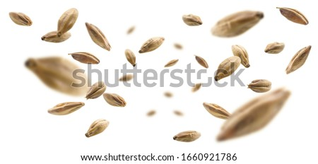 Barley malt grains levitate on a white background #1660921786