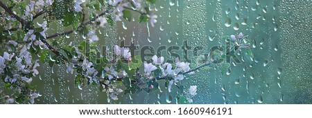 spring flowers rain drops, abstract blurred background flowers fresh rain Royalty-Free Stock Photo #1660946191