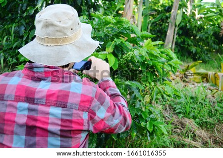 Young man taking a photo of a coffee tree. Male using phone to take pictures of nature. Coffee tree on farm in Puerto Rico. Using an iPhone to take pictures.