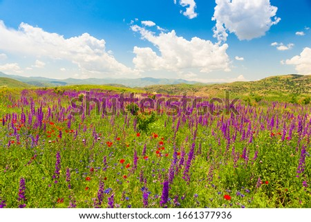 mountains of Armenia covered with beautiful wildflowers on a sunny summer day landscape #1661377936