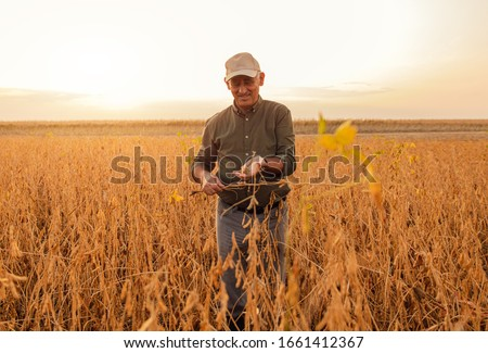 Portrait of senior farmer standing in soybean field examining crop at sunset. #1661412367