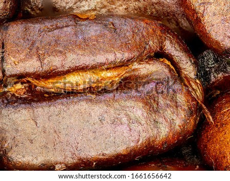 Close up of a coffee bean. Macro panorama photography of coffee beans in high resolution. Detailed ultra macro on a roasted coffee bean.  Microscopic photography. Useful as a banner in a coffee shop
