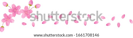 It's sevral pink cherry petals, and cherry blossoms, cutout picture style,vector illustration. #1661708146