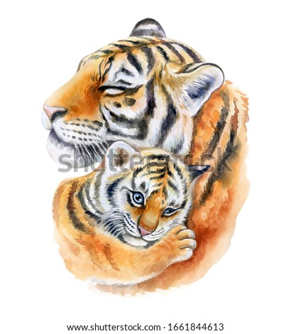 Tigers. Mum with a child isolated on a white background. Tigress mom hugs baby. Embrace. Watercolor. Illustration. template. Close-up. Clipart. Mothers Day. Greeting card design.