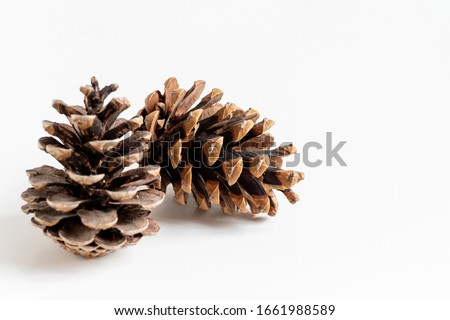 close up of natural two pinecones in brown color for decoration isolated on white background with copy space.   Royalty-Free Stock Photo #1661988589