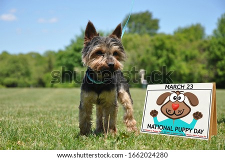 National Puppy Day Calendar with celebration suggestions on grass next to Yorkie canine