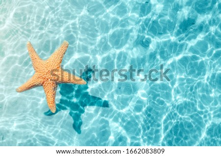 Starfish on the summer beach in sea water. Summer background. Summer time. Royalty-Free Stock Photo #1662083809