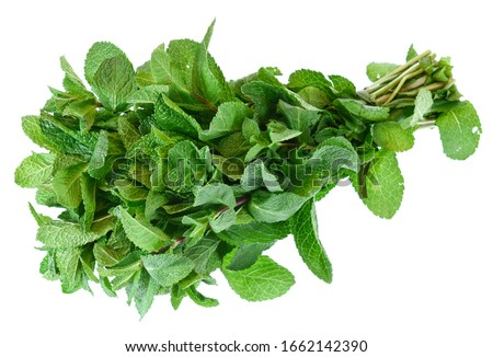 Bunch of fresh mint isolated on white background Royalty-Free Stock Photo #1662142390