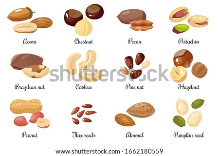 Nuts and seeds. Almond and pistachio, acorn and peanut, chestnut, and pecan. Cashew and hazelnut, pumpkin and flax seeds cartoon vector snack food set #1662180559