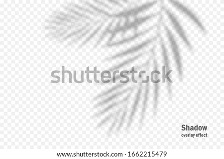 Vector shadow overlay effect. Transparent soft light and shadows from branches, plant and leaves. Mockup of transparent leaf shadow and natural lightning. #1662215479