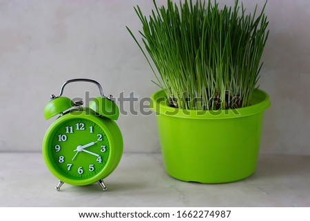 Bright green alarm clock and fresh grass in a bright green flower-pot on a light background. Soft focus.