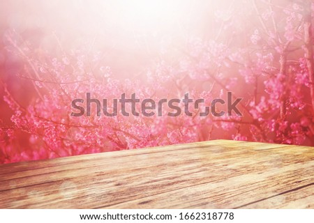 Blossoming cherry blossom branch in spring seasona with wooden desk for product stand