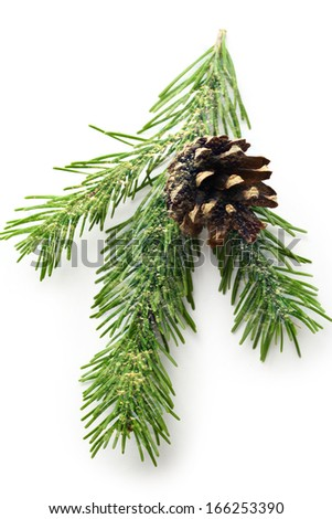 Twig of evergreen fir and cone #166253390