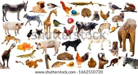 high quality set or collection of farm animals wild and domestic. isolated on white background