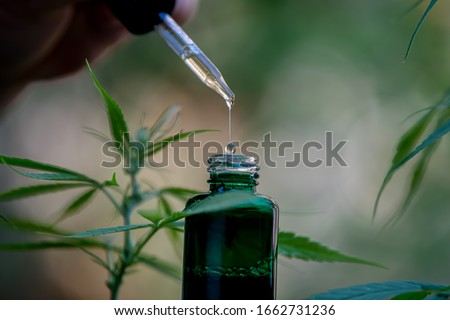 CBD hemp oil, drip, bio-medicine and ecology, hemp plant, herb, medicine, cbd oil from medical extraction Royalty-Free Stock Photo #1662731236