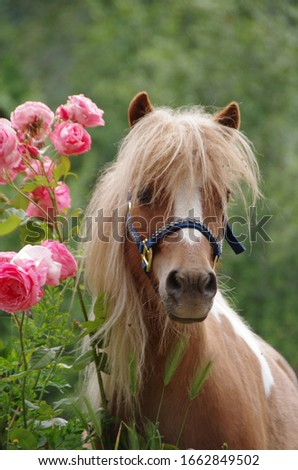 Mini horse with pink roses on green background
