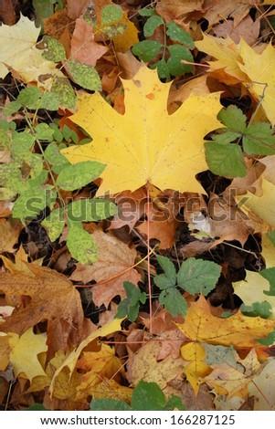 autumn leafs #166287125