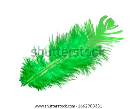 Feather of a bird on a white background, bright colored feathers. #1662903331