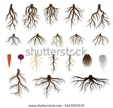 Root system set vector illustrations. Taproot and fibrous rooted brown silhouettes of various plants, trees, vegetables below ground level. Underground branched root design isolated icons on white #1663002610