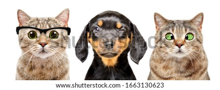Portrait of dog and cats with eyes diseases isolated on a white background Royalty-Free Stock Photo #1663130623