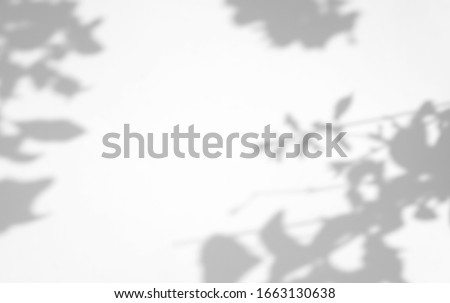 Organic Leaves natural shadow overlay effect on white texture background, for overlay on product presentation, backdrop and mockup #1663130638