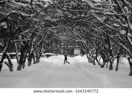 Untitled man in black/white colour with trees arch in winter         #1663140772