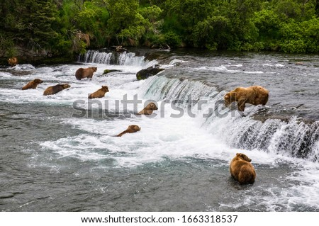 Bears fishing salmon at brooks fall in Katmai National Park and Preserve, Alaska #1663318537