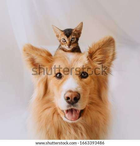 happy mixed breed dog portrait with a kitten on his head #1663393486